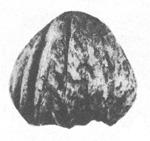 137-20а.jpg