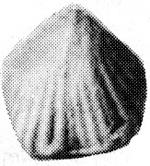 183-104.jpg