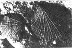 183-106.jpg