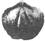 184-116б.JPG