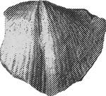 248-41а.jpg