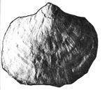 252-100б.jpg