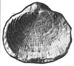 252-300б.jpg