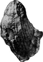 252-4а.jpg