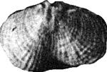 254-30а.jpg