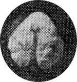 260-179а.jpg