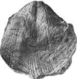 269-161а.jpg