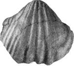 269-172а.jpg