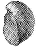 269-176а.jpg