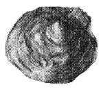 269-2а.jpg