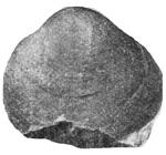 269-204.jpg