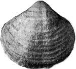 269-208а.JPG