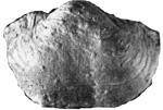 269-94а.jpg