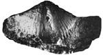 271-61.jpg