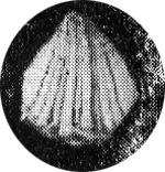 271-74а.jpg